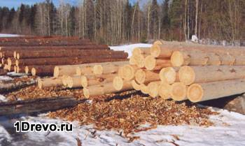 1-zimnyaya-zagotovka-lesa.jpg