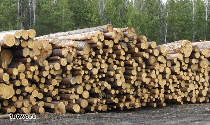 Различия зимнего и летнего леса