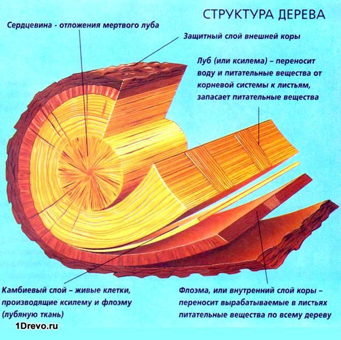 Структура бревна