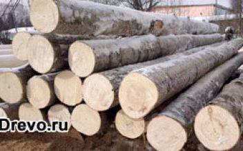 Можно ли делать сруб из осины для жилого дома
