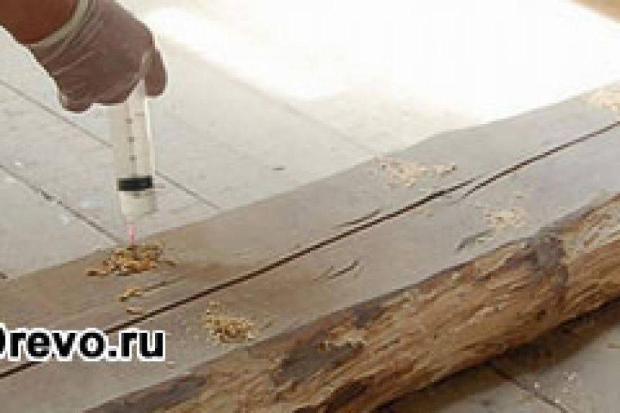 Чем обработать древесину от короеда?