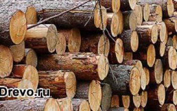 Лучшие породы древесины для строительства дома