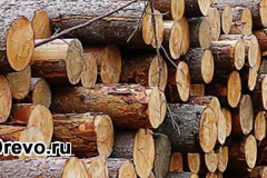 Из какого дерева делают брус