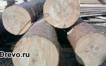 Основные породы древесины для строительства дома