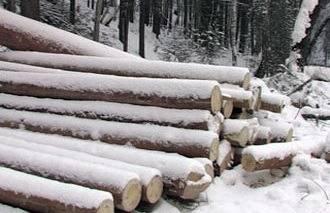 Зимний лес для строительства