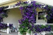Как украсить веранду на даче своими руками