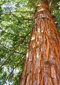 Выбор качественного леса