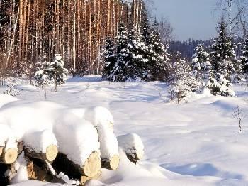 Зимняя вырубка леса